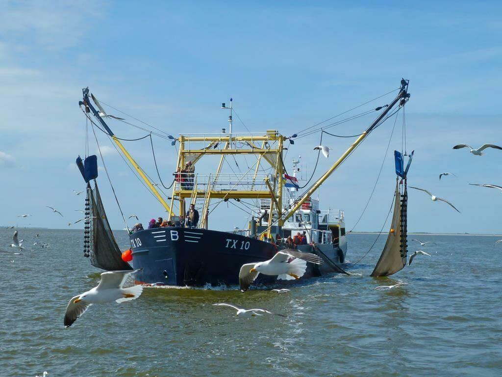 Garnalen vissen texel tx 10 VVV Texel