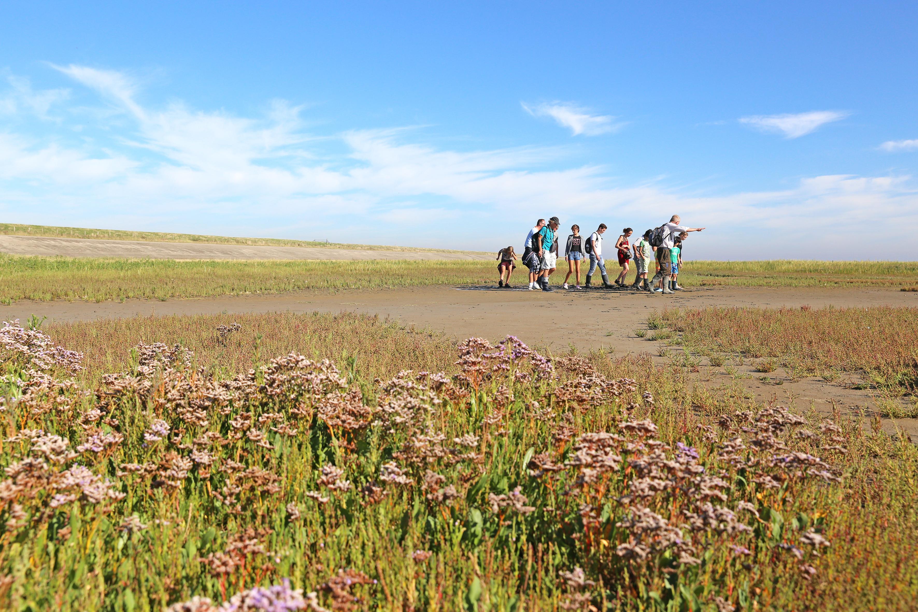Natuurexcursie de Schorren Natuurmonumenten VVV Texel Fotograaf Gertha Wessels