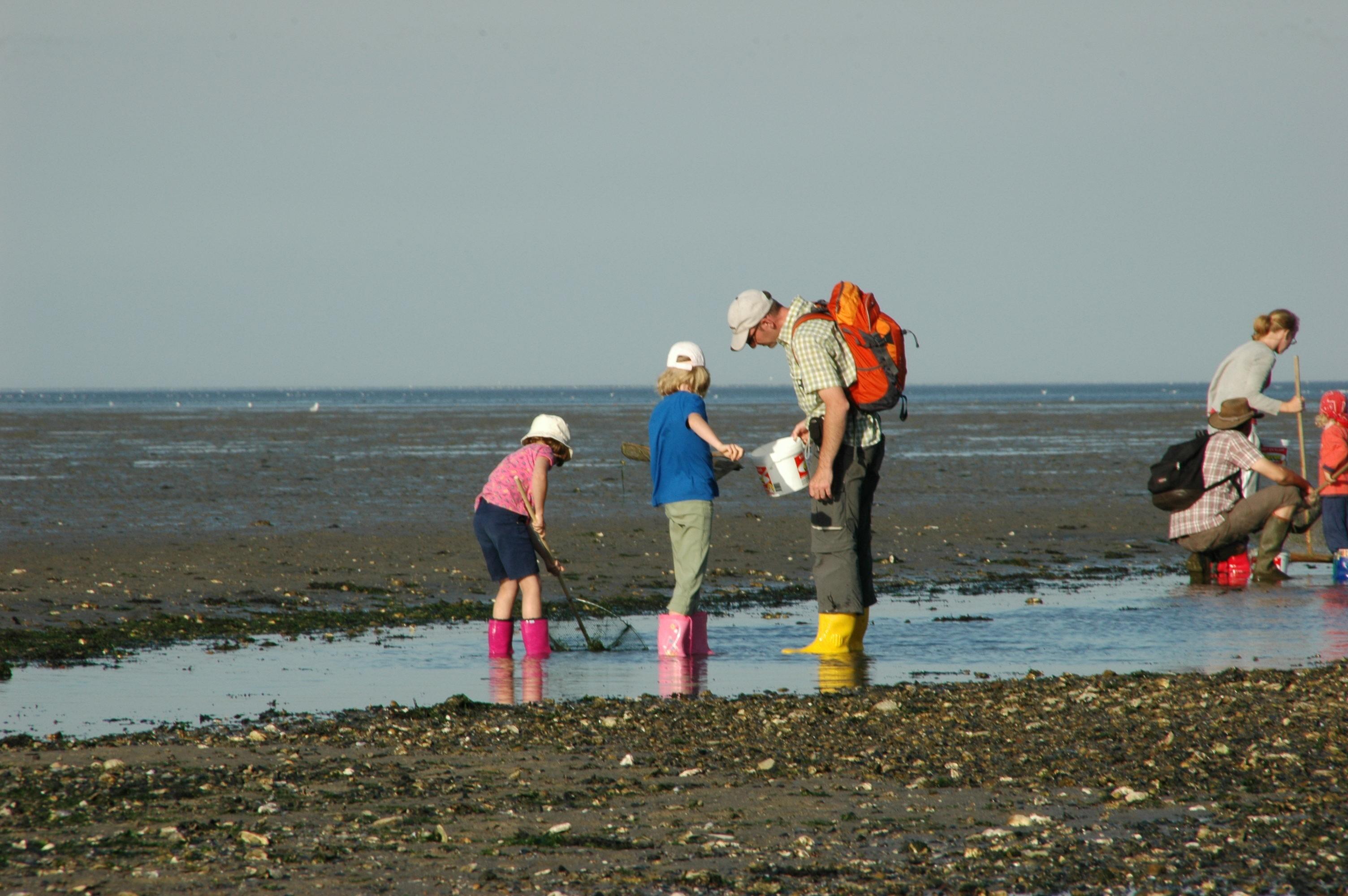 Wadlopen op Texel familieprogramma Ecomare VVV Texel