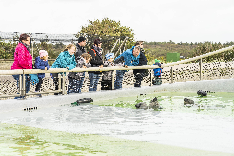 Kijken bij de zeehonden bij Ecomare VVV Texel fotograaf Liselotte Schoo
