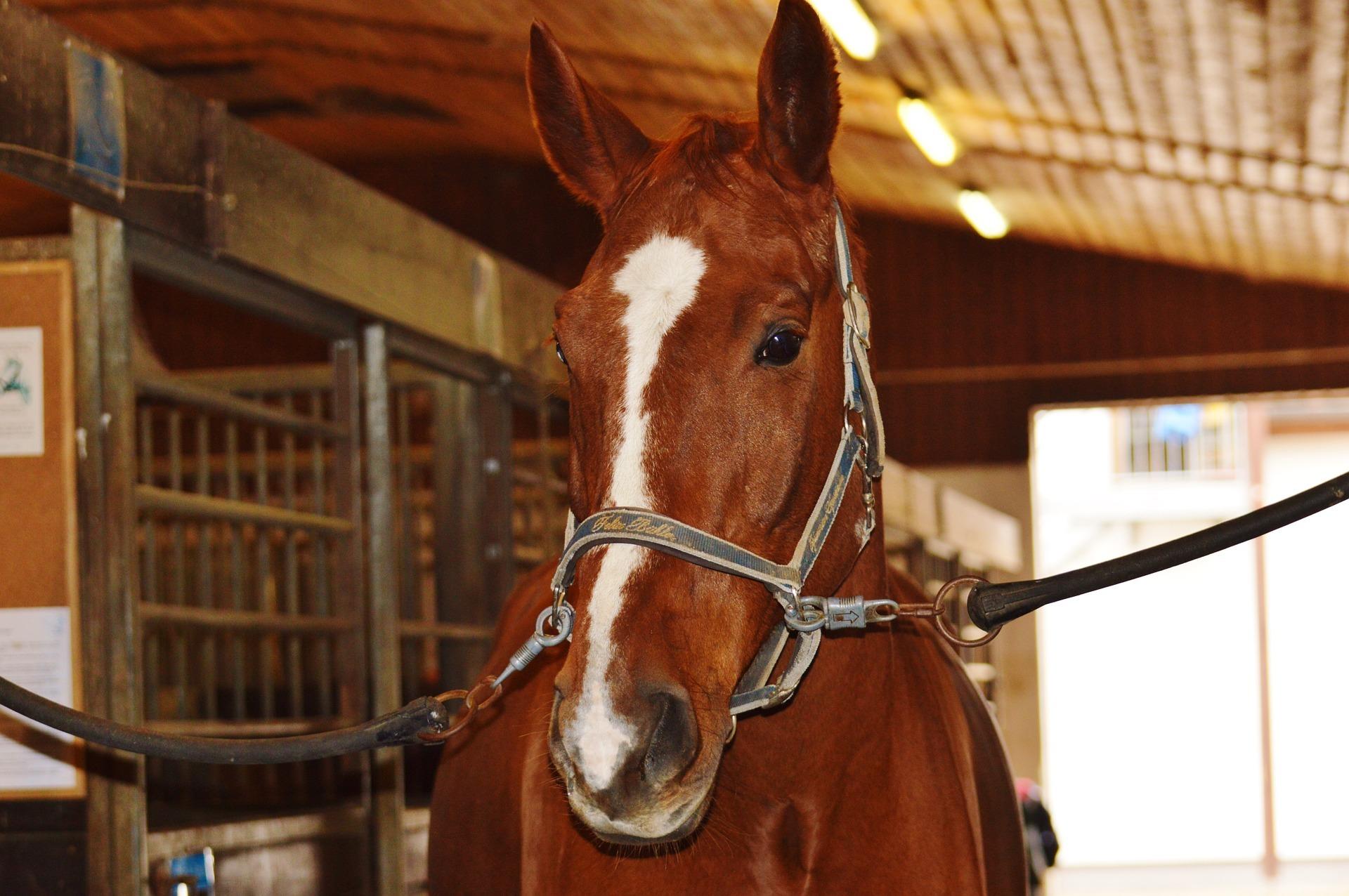 Paard meenemen naar Texel VVV Texel