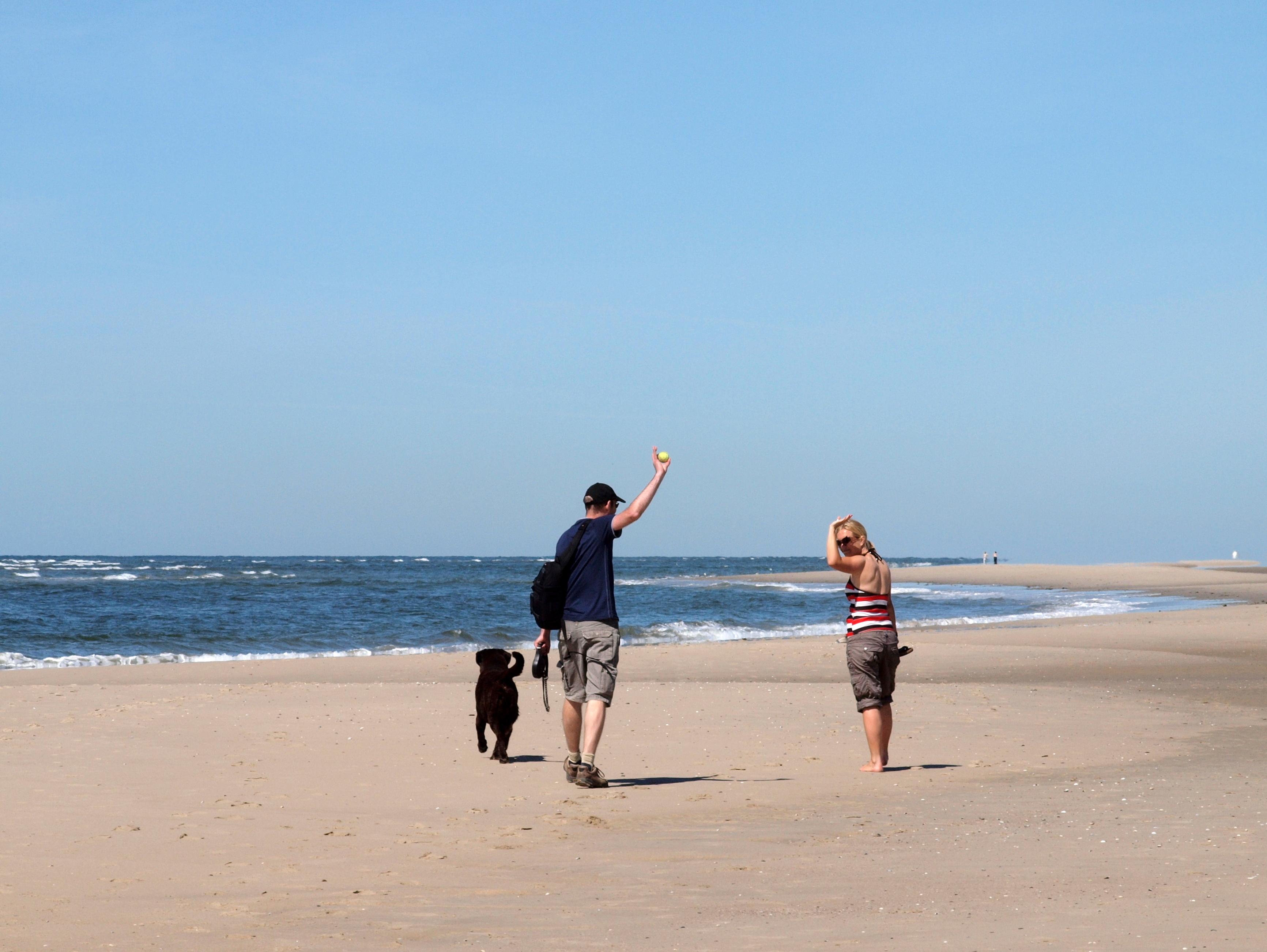 Voor hondenbezitters wandelen op het strand VVV Texel Knook