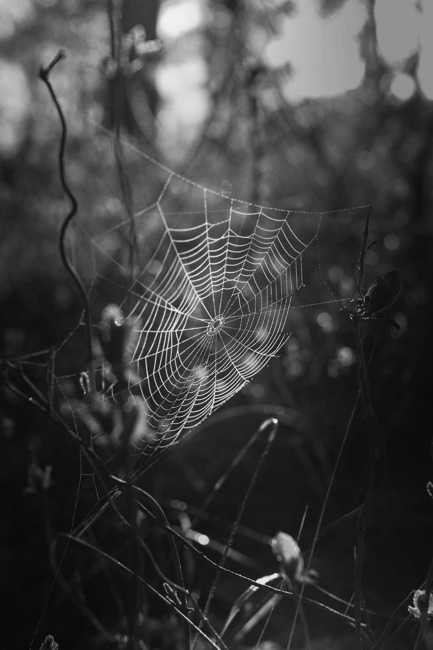 Spinnenweb met spin fotograaf Liselotte Schoo VVV Texel