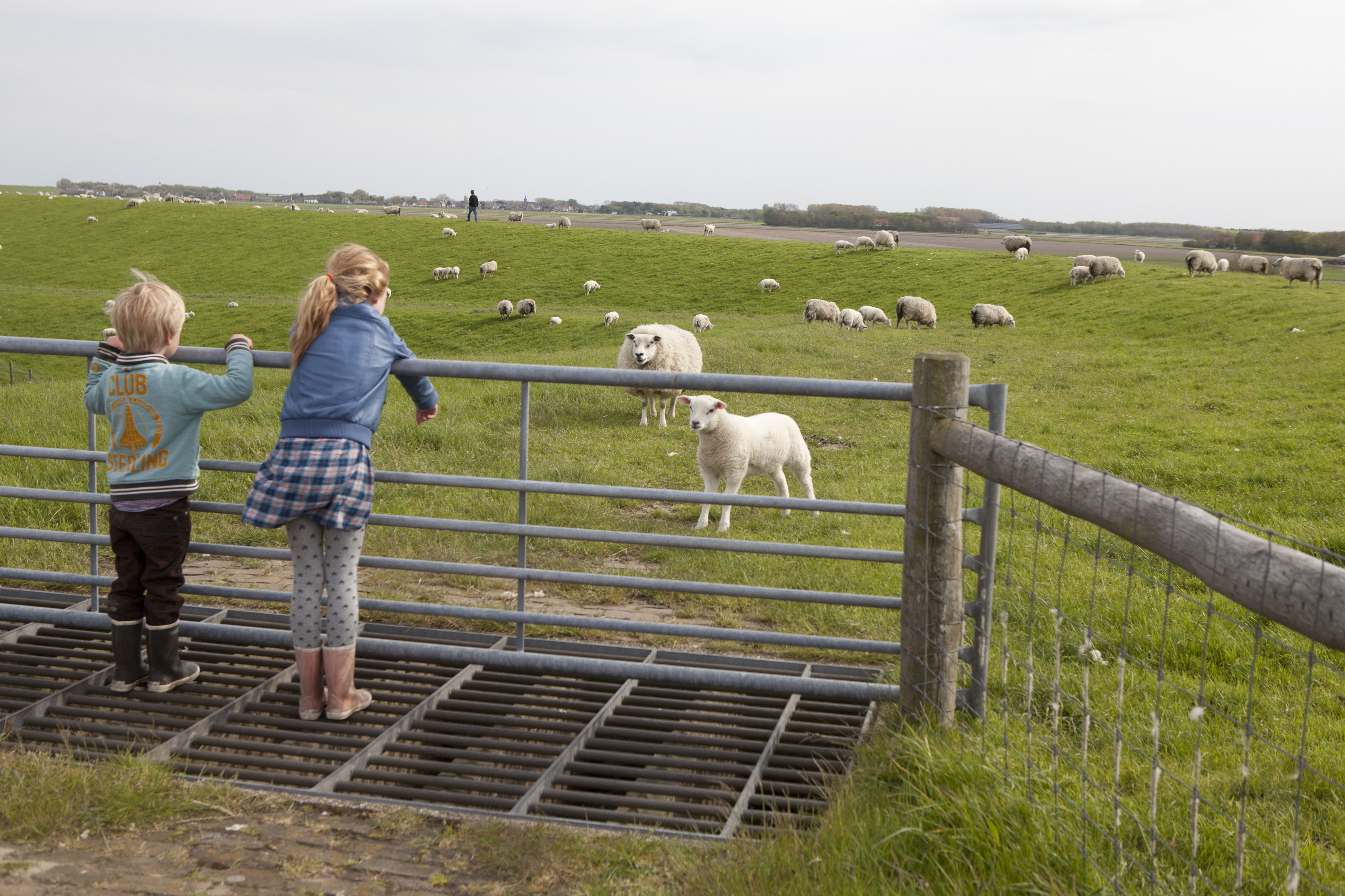 Kinderen bij schapen en lammetjes fotograaf Tessa Jol VVV Texel