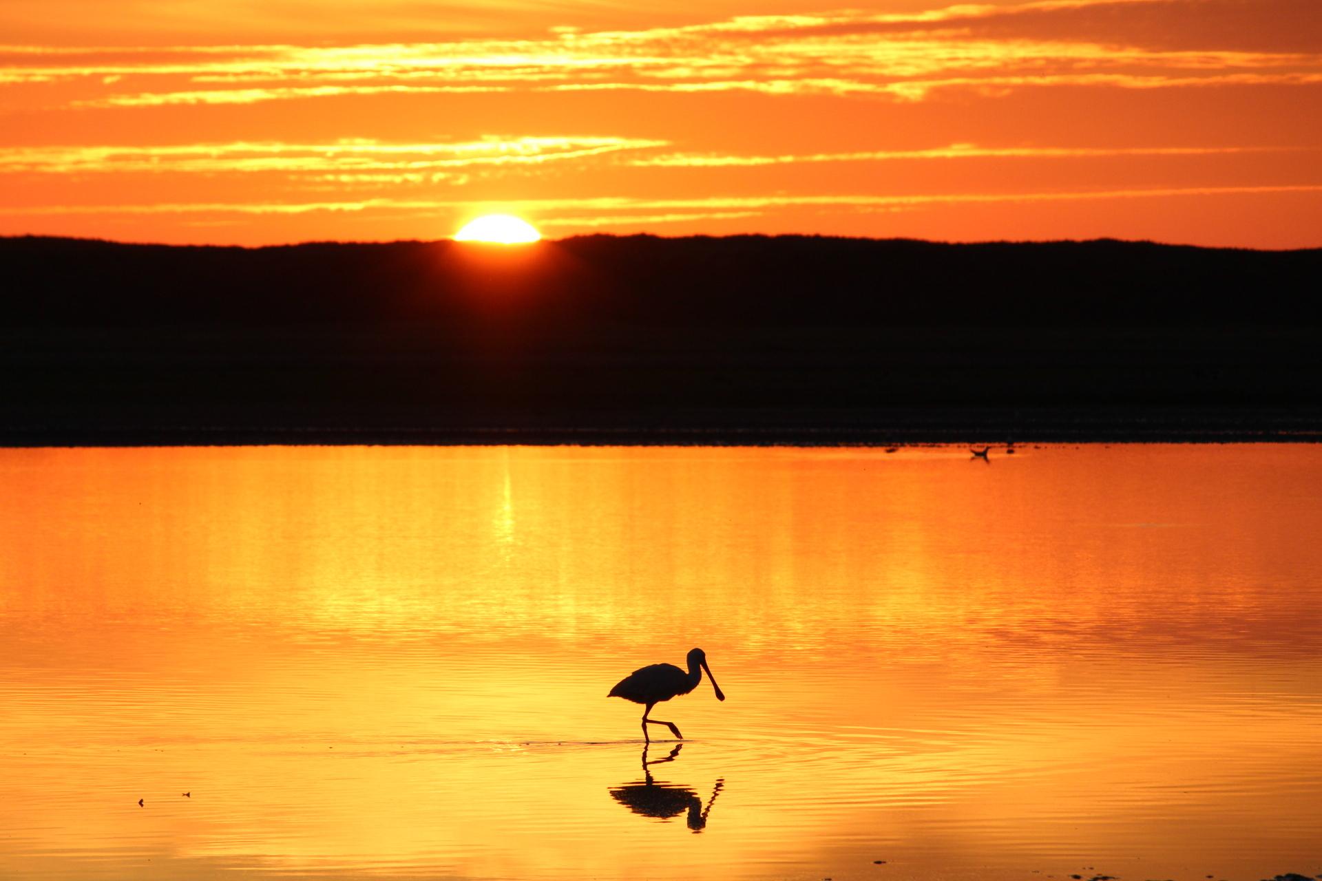 Lepelaar met zonsondergang VVV Texel fotograaf Laura Noord