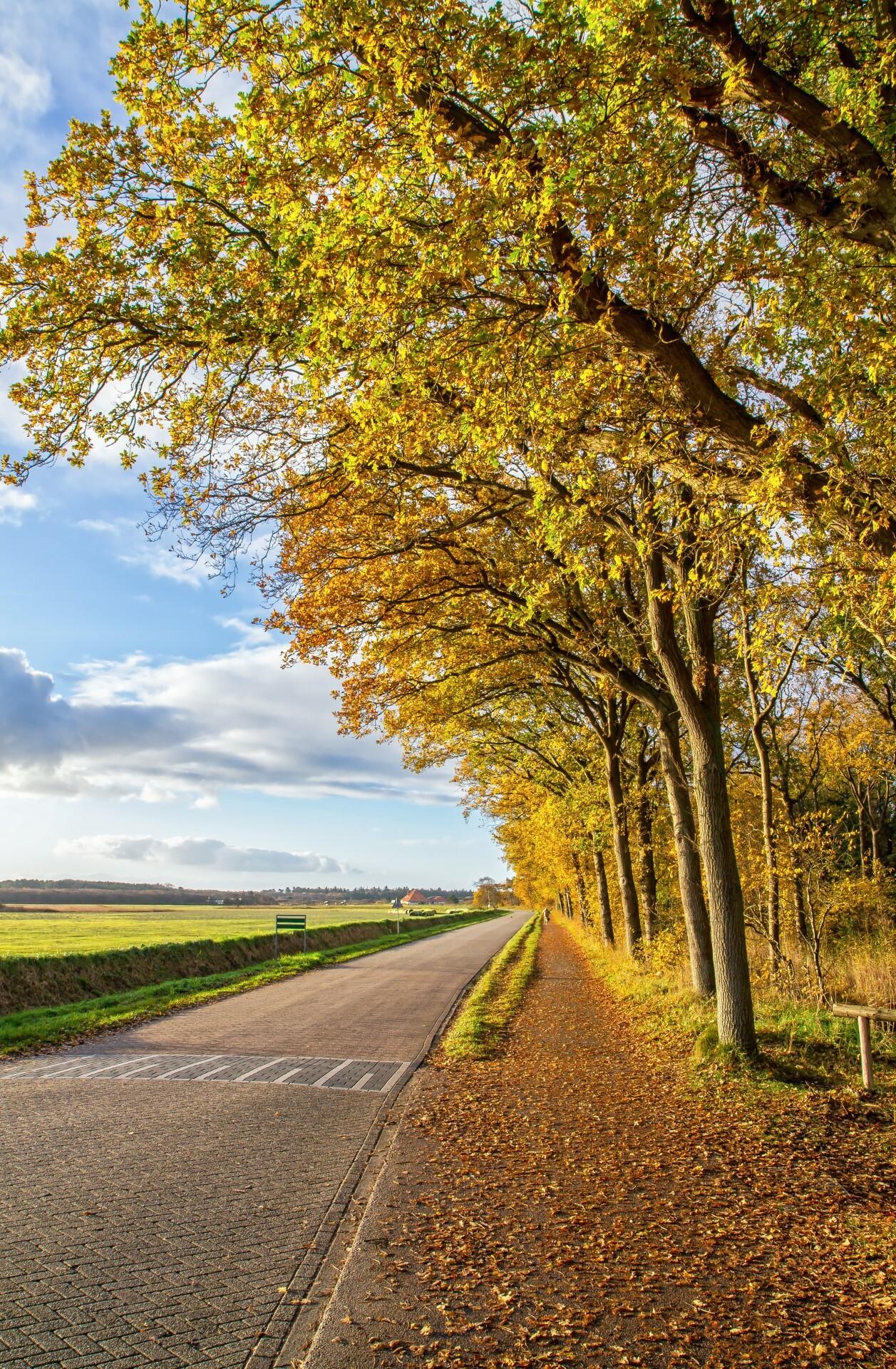 Herfstbos langs de weg bij De Koog VVV Texel fotograaf Justin Sinner