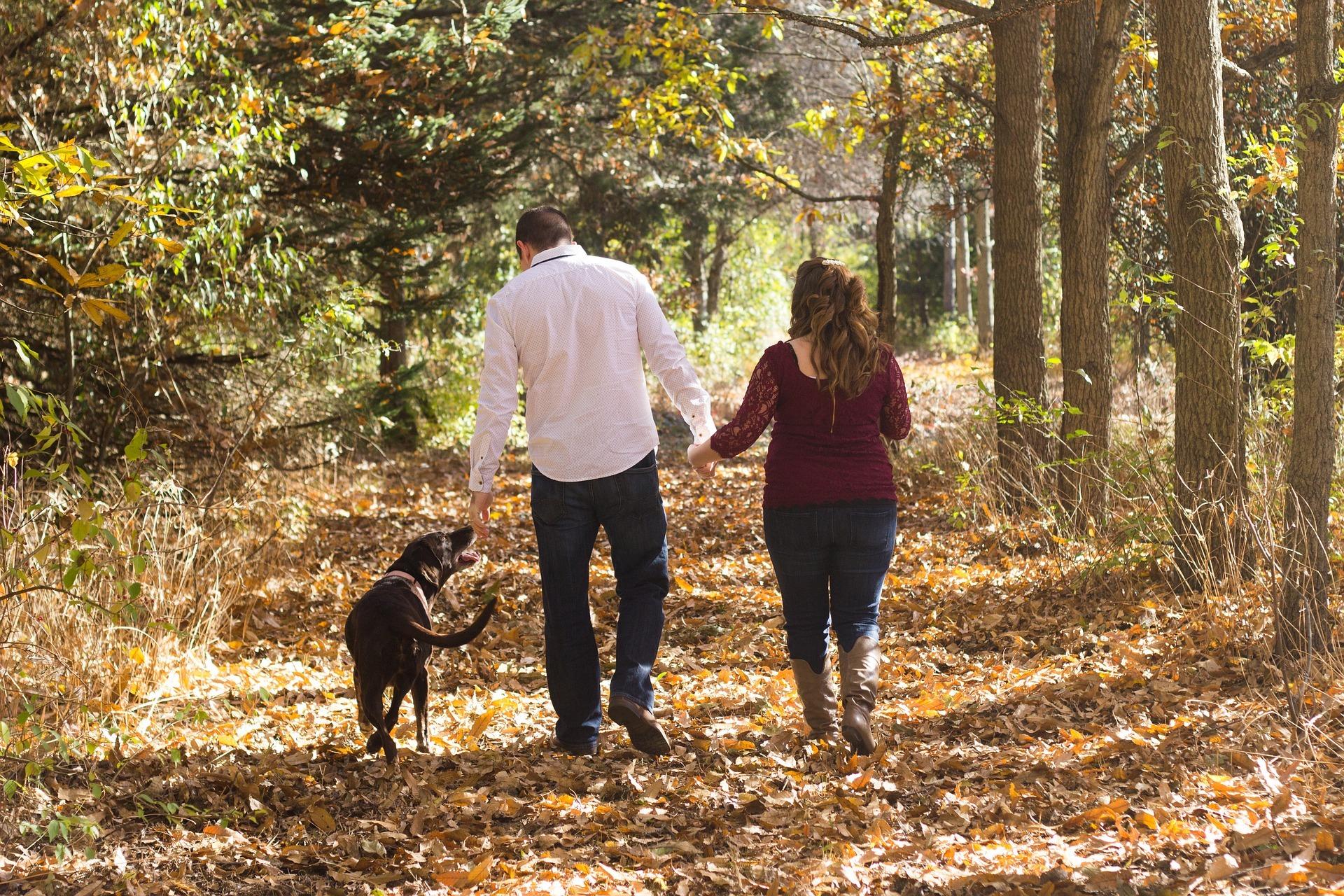 Wandelen in het bos met de hond VVV Texel