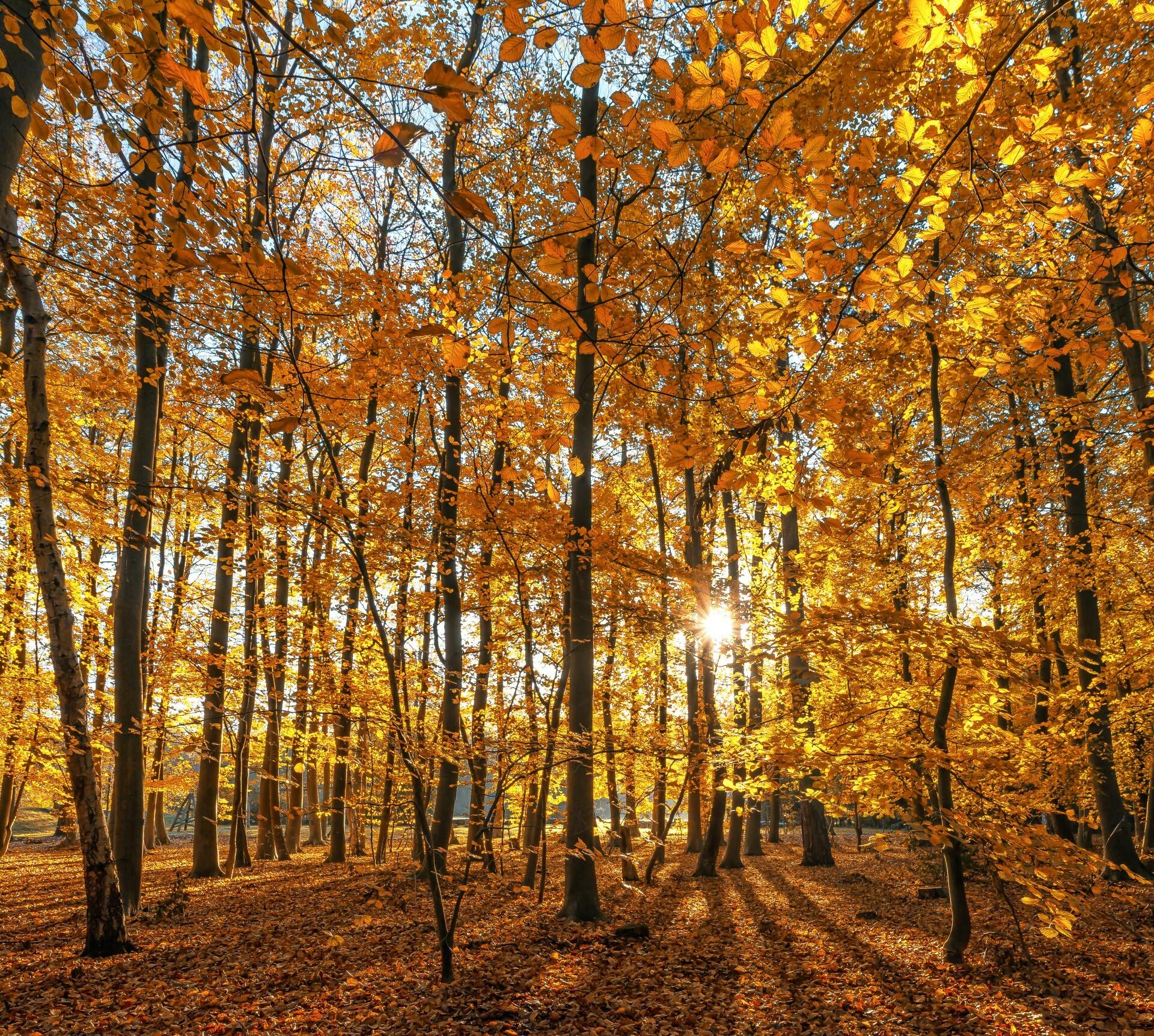 Zon schijnt door herfstbos VVV Texel fotograaf Justin Sinner