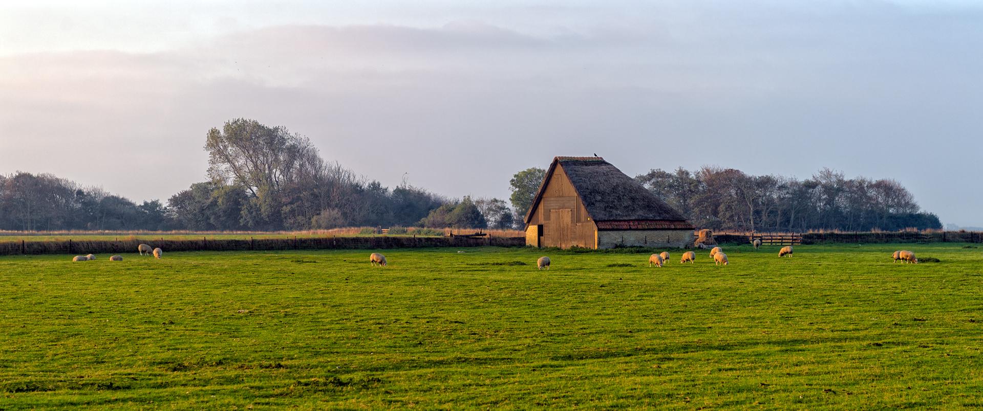 Schapenboet in de winter landschap fotograaf Roel Ovinge VVV Texel