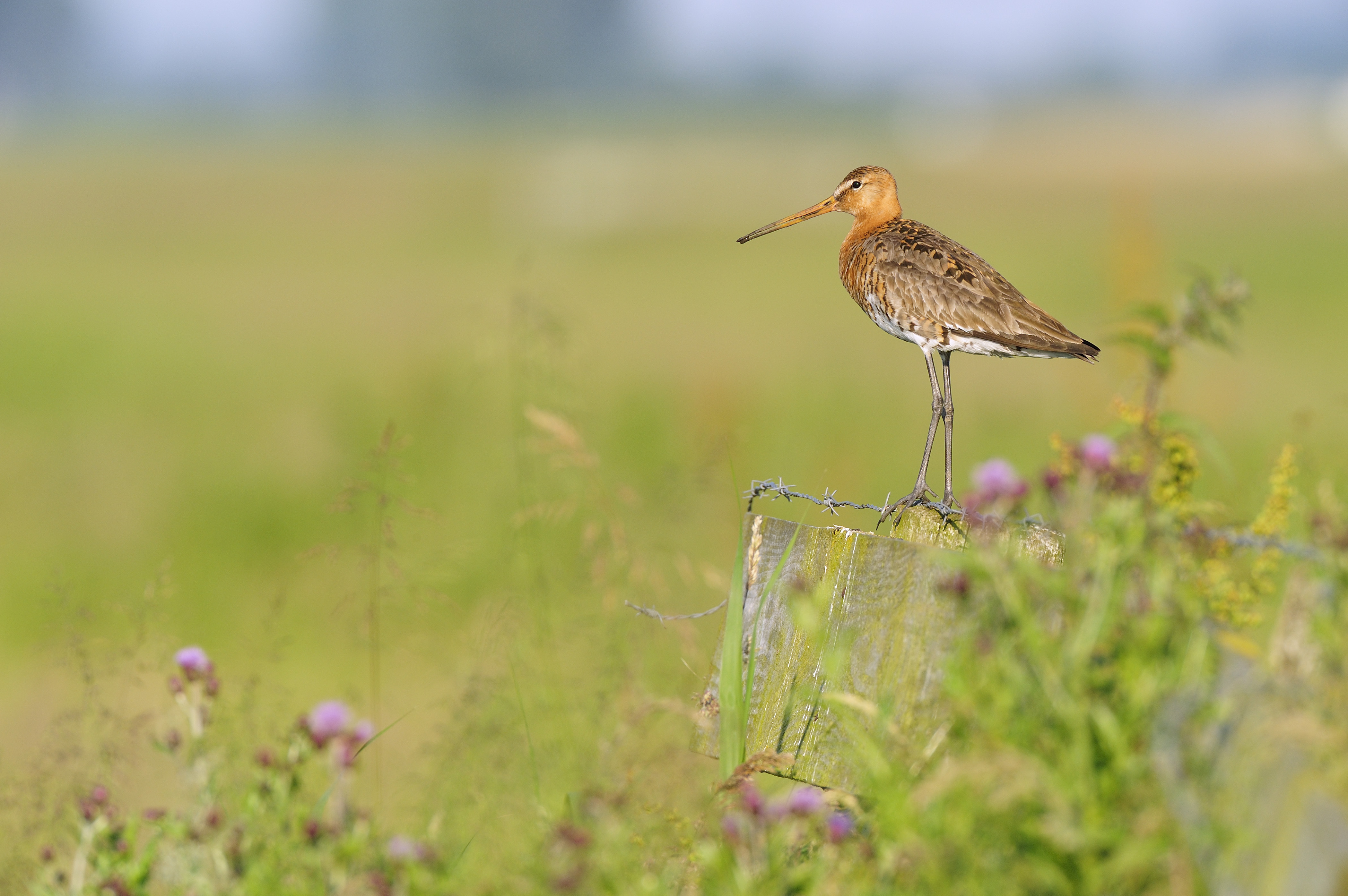 Vogel in natuurgebied Waalenburg Natuurmonumenten VVV Texel