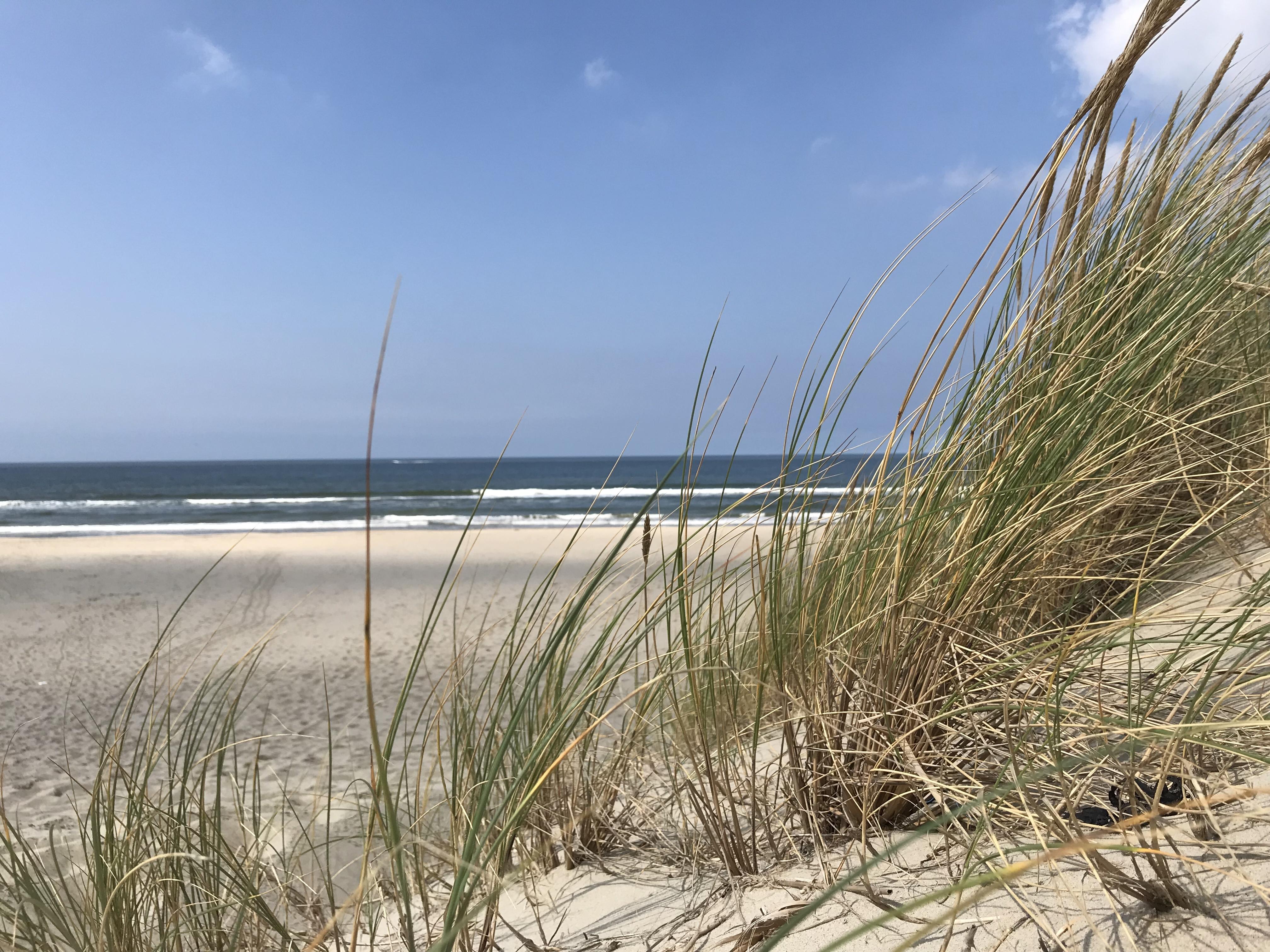 Helmgras bij het strand VVV Texel